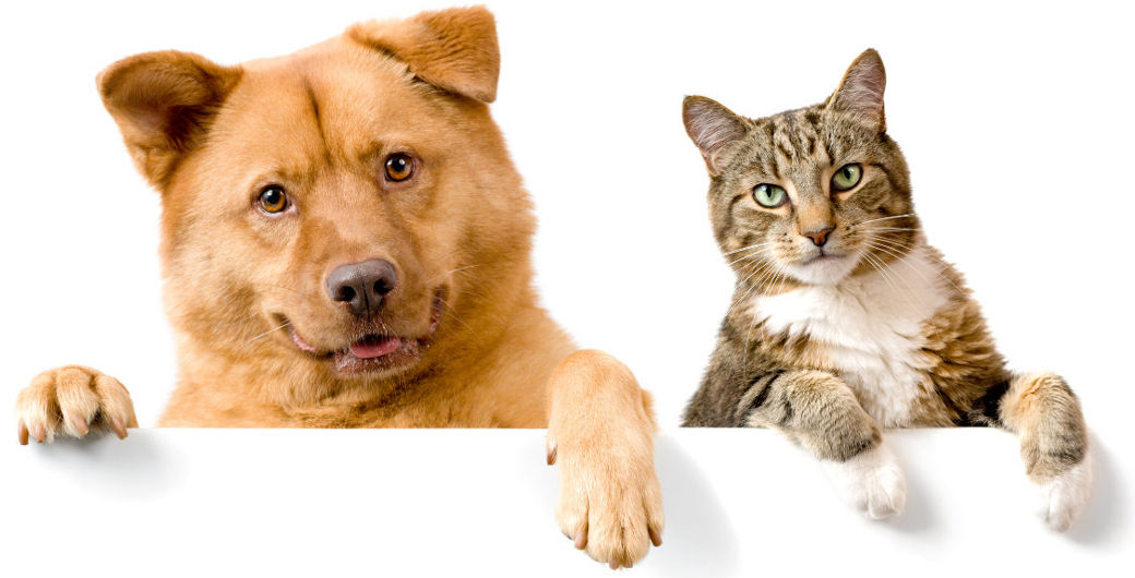 Cat and Dog Header